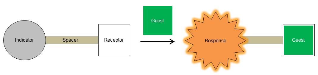 Sensing of ion or molecule